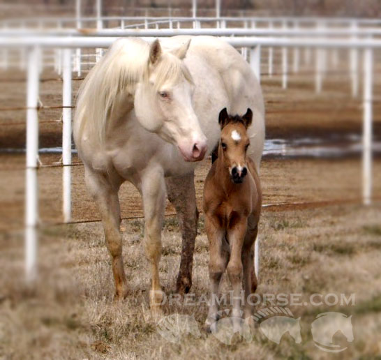 Foaling Date Calculator