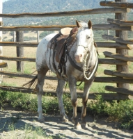 Search Results List - DreamHorse com - Dream Horse Classifieds