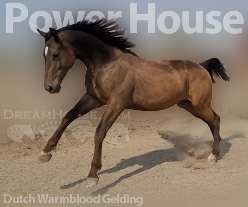Horse ID: 2175722 Power house