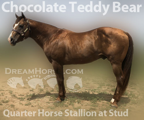 Horse ID: 2176494 Chocolate Teddy Bear