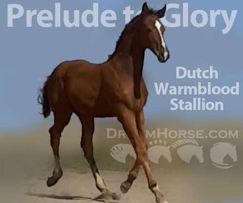 Horse ID: 2178276 Prelude to Glory