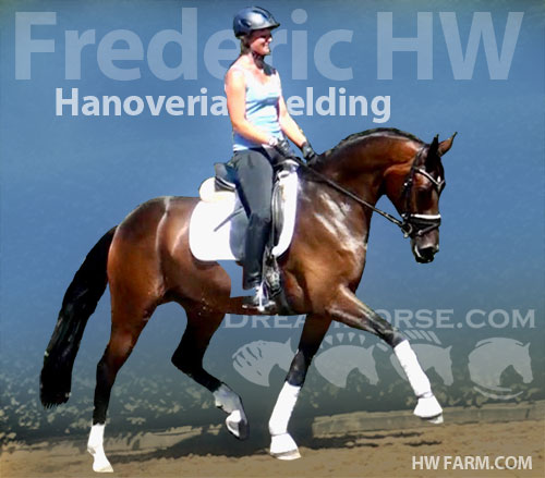 Horse ID: 2179778 Frederic HW @ www.HWfarm.com - dreams come true