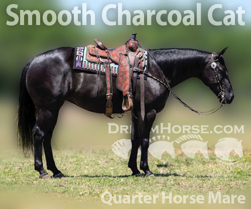 Horse ID: 2180002 Smooth Charcoal Cat