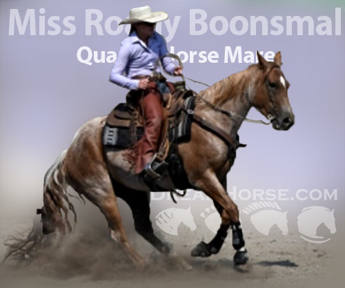 Horse ID: 2180084 Miss Roany Boonsmal