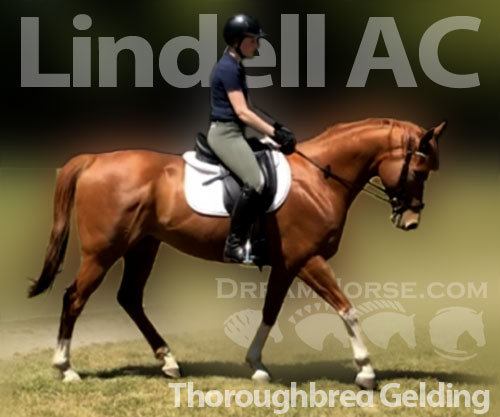 Horse ID: 2180671 Lindell AC