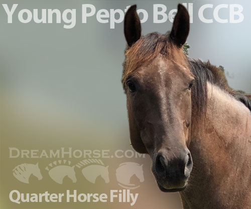 Horse ID: 2181092 Young Pepto Bell CCB
