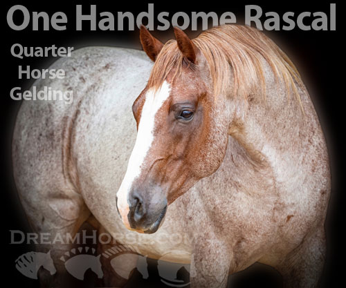 Horse ID: 2181387 One Handsome Rascal
