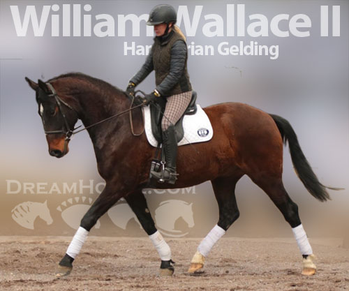 Horse ID: 2181493 William Wallace II