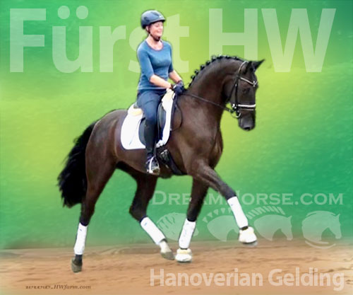 Horse ID: 2181661 Fürst HW @ www.HWfarm.com - where dreams come tru