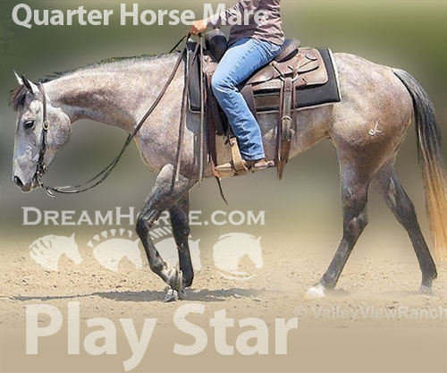 Horse ID: 2181800 Play Star