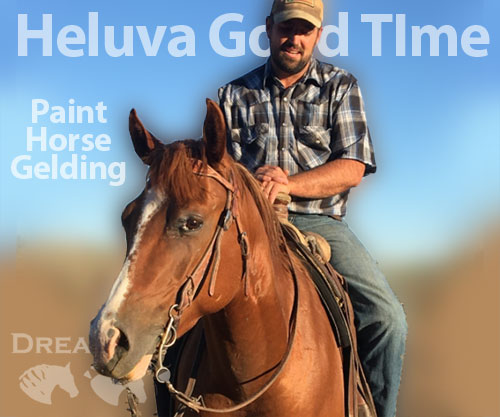 Horse ID: 2181928 Heluva Good TIme