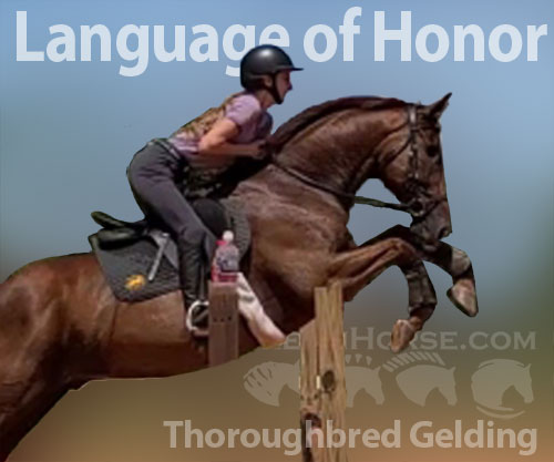Horse ID: 2182544 Language of Honor