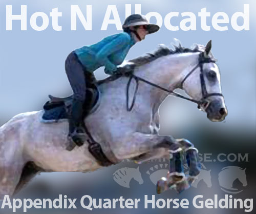 Horse ID: 2182879 Hot N Allocated
