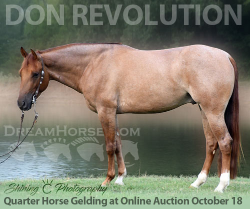 Horse ID: 2184291 DON REVOLUTION