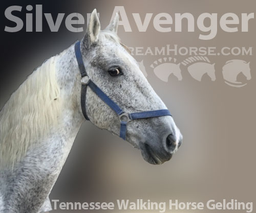 Horse ID: 2184601 Silver Avenger