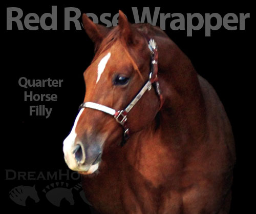 Horse ID: 2184746 Red Rose Wrapper