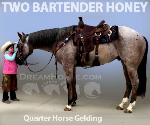 Horse ID: 2185041 TWO BARTENDER HONEY