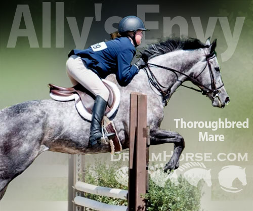Horse ID: 2185100 Ally's Envy