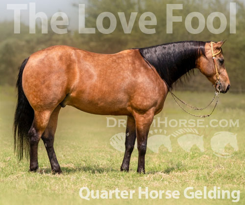 Horse ID: 2185242 The Love Fool