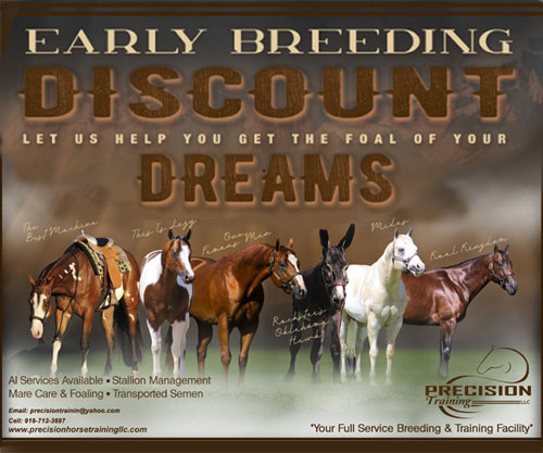 Horse ID: 2185275 EARLY BREEDING DISCOUNTS