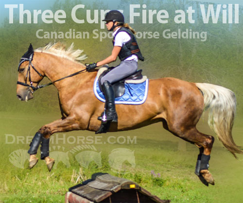 Horse ID: 2185490 Three Cups Fire at Will
