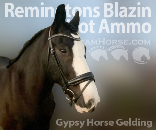 Horse ID: 2186405 Remingtons Blazin Hot Ammo