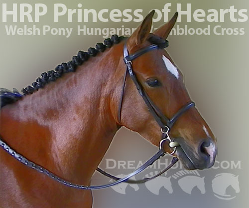Horse ID: 2186875 HRP Princess of Hearts