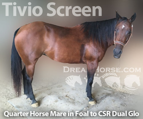 Horse ID: 2186960 Tivio Screen