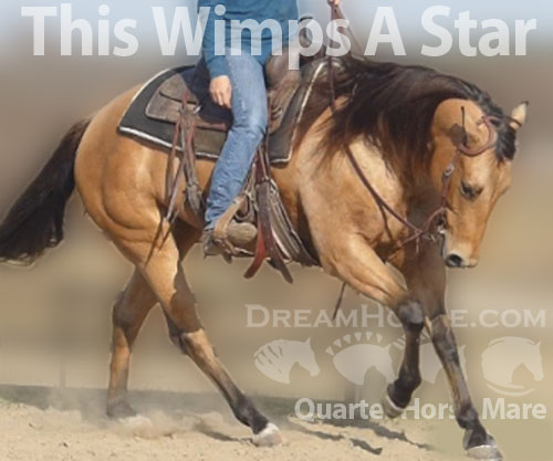 Horse ID: 2186992 This Wimps A Star
