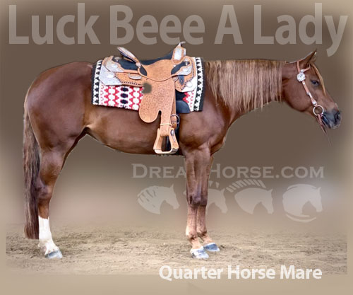 Horse ID: 2187161 Luck Beee A Lady