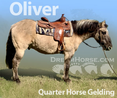 Horse ID: 2187220 Oliver