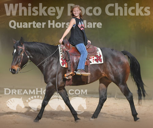 Horse ID: 2187527 Whiskey Poco Chicks