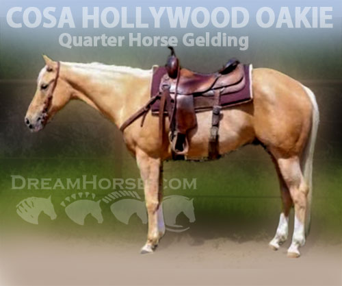 Horse ID: 2187599 COSA HOLLYWOOD OAKIE