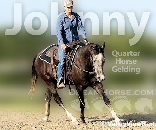 Horse ID: 2188657 Johnny
