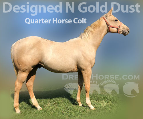Horse ID: 2188732 Designed N Gold Dust