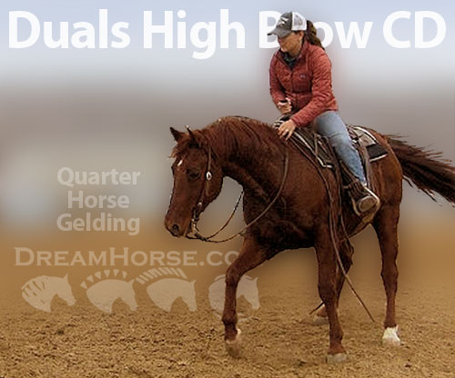 Horse ID: 2190026 Duals High Brow CD