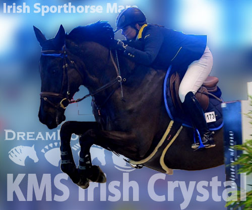 Horse ID: 2190176 KMS Irish Crystal