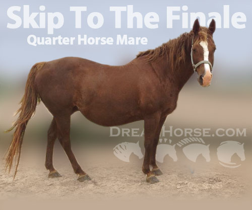 Horse ID: 2191847 Skip To The Finale