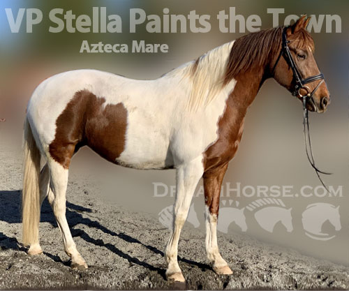 Horse ID: 2192529 VP Stella Paints the Town