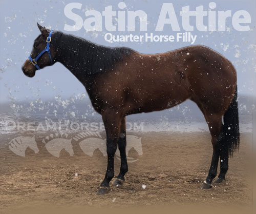 Horse ID: 2193126 Satin Attire