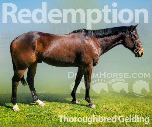 Horse ID: 2193150 Redemption