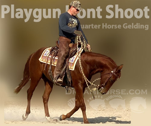Horse ID: 2193736 Playgun Dont Shoot